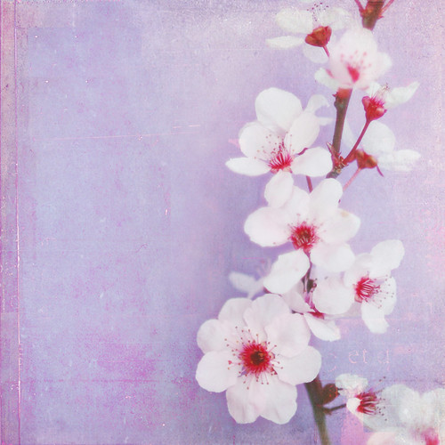 Plum Blossoms | by Shana Rae {Florabella Collection}