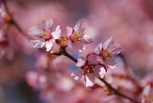 Blossoming bokeh! | by ineedathis, Everyday I get up, it's a great day!