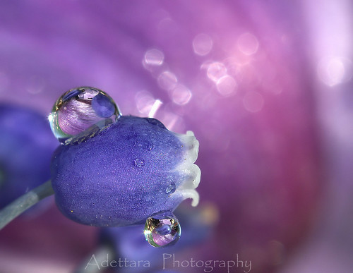 ~April Rain~ | by Adettara Photography