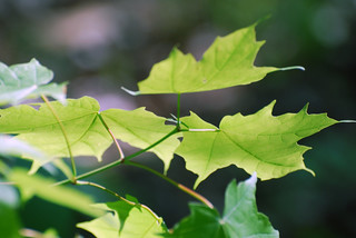Leaves | by The Webhamster