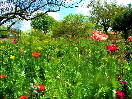 San Antonio Texas Botanical Gardens Molly258 Flickr