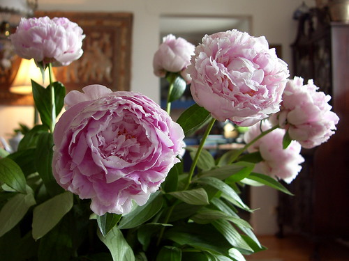 peonies (2) | by kexi