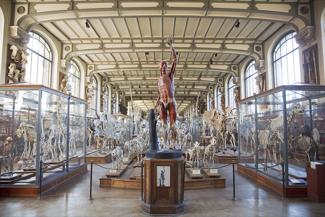 Muséum national d\'histoire naturelle, Gallery of Palaeonto… | Flickr