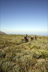 Horse Riding in the Grootbos 1 | by wine_scribbler