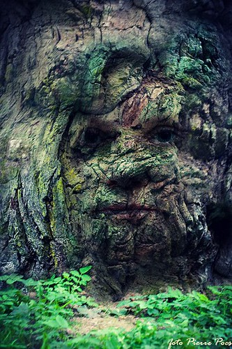 Forest Face | by Pierre Pocs