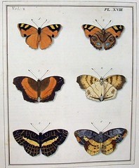 Dru Drury Illustrations Of Natural History