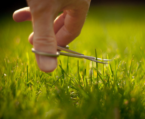 Some people say I am obsessed with my lawn | by Jez Page