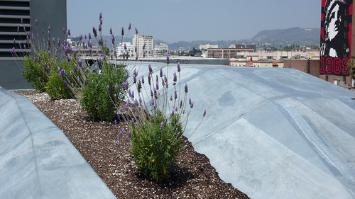 SYNTHe green roof, Los Angeles | by cityofsound