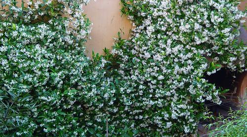 Verde de flores en hotel - 2 9