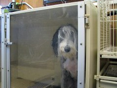 Dog Grooming Drying Techniques