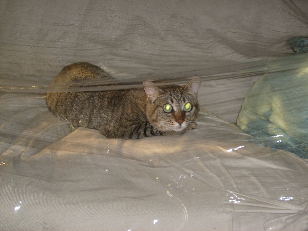 ... Calvin Under Plastic Sofa Cover | By Jazzmodeus