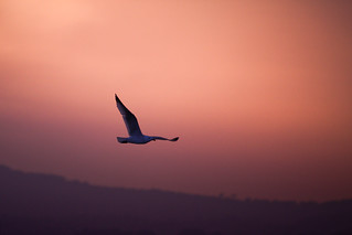 Sunset flight | by Marcel Neumann