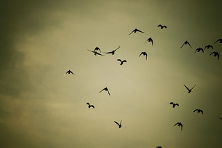 flock | by Colin/Murphy