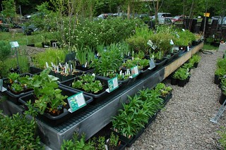 Native Bog Plants for sale at Catskill Native Nursery | by Flatbush Gardener