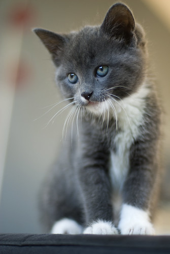Muffin // Our new kitten | by Merlijn Hoek