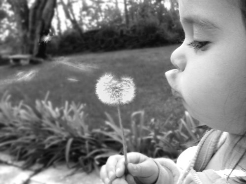 dandelion blowing | by sudonim_85