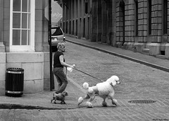 poodles-in-old-montreal | by Eva Blue