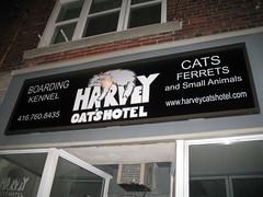 Cat Hotel Dupont Toronto