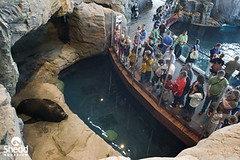 Shedd Aquarium sea lion habitat | New photo of Shedd ...