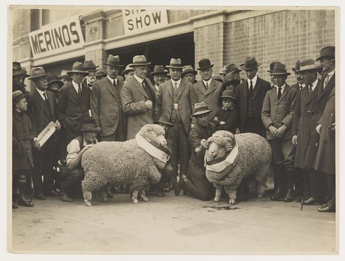 Sheep shows, sheep and wool industry / by Sam Hood | by State Library of New South Wales collection