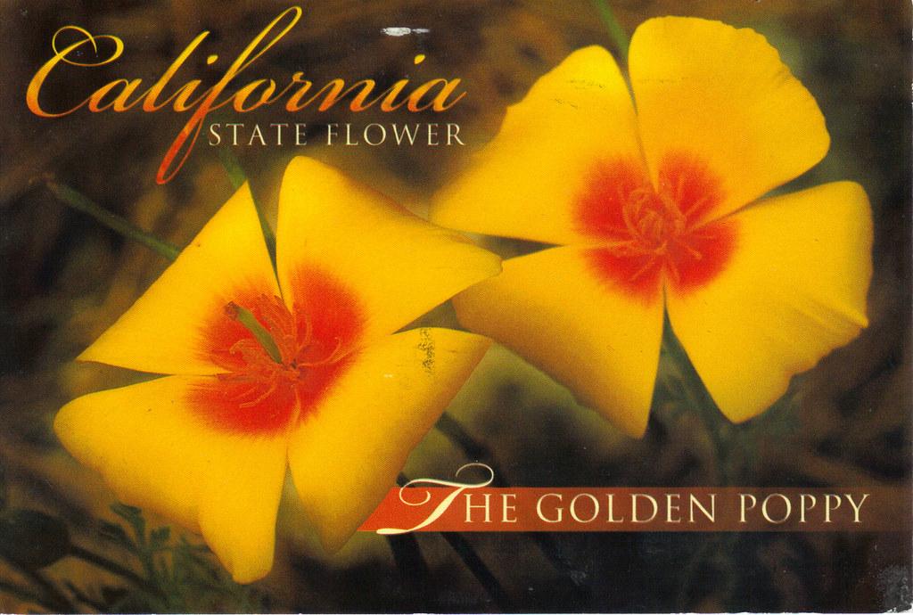 California state flower postcard us us i offer tag from a flickr california state flower postcard by crayolamom california state flower postcard by crayolamom mightylinksfo