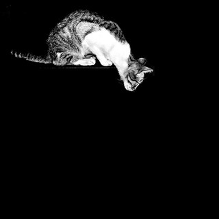 cat in the dark ( hunting ) | by Paulo Lucic*