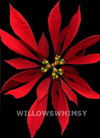 Poinsettia Euphorbia Pulcherrima | by willowswhimsy