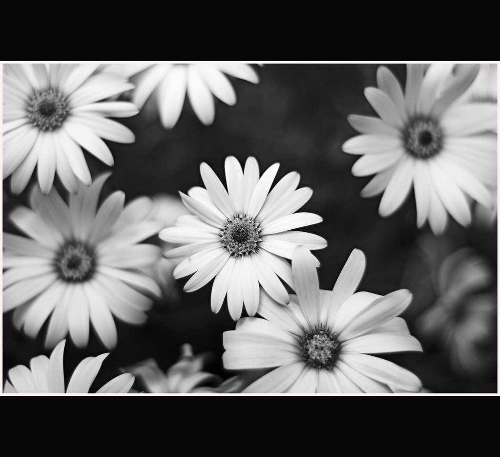 Pretty Flowers Black And White Pretty Flowers Black An Flickr