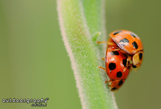Outdoorgraphy™: Ladies? .. bugs? | by Sir Mart Outdoorgraphy™