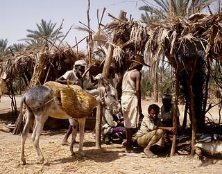 Yemen - Tihama Yemen
