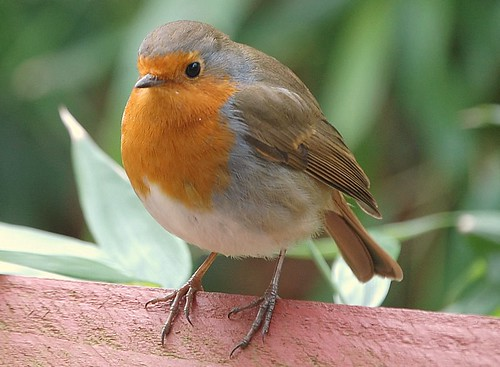 robin | by coral.hen4800