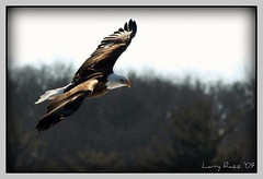 Soaring | by rrazz67(off more than on)