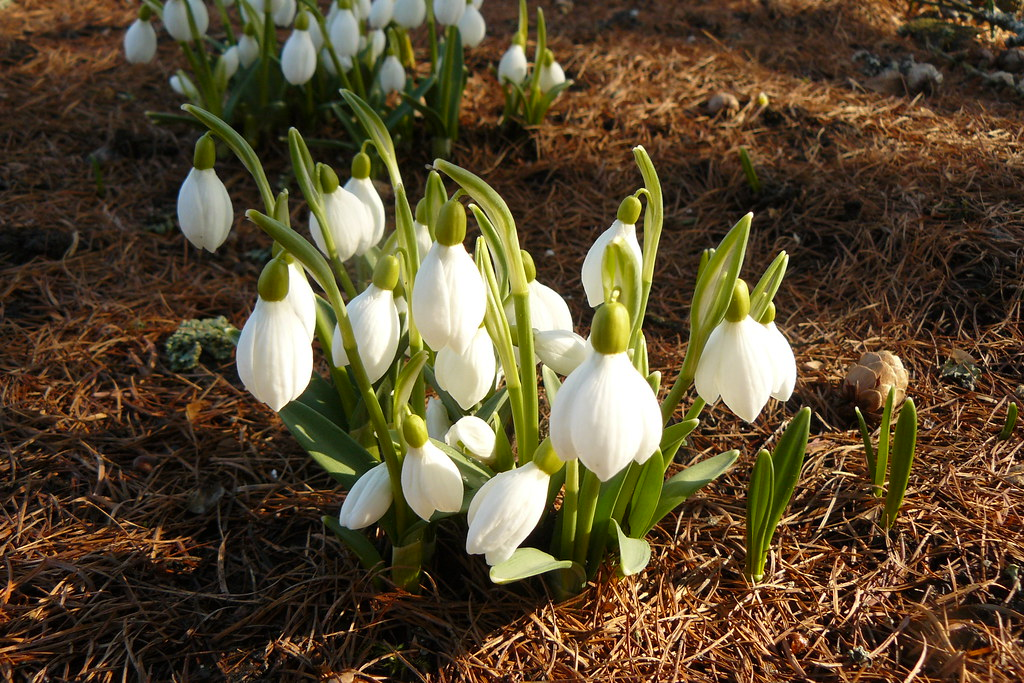 Erste Fruhlingsblumen Aadu Flickr