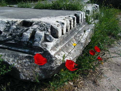 Poppies at Delphi | by tortipede