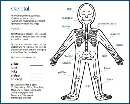 My Body Anatomy For Kids Ebook More Information About How Flickr