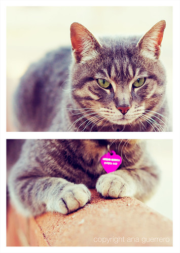 * the weirdest cat diptych * | by * Ana.Guerrero *