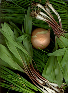 Grand Army Plaza Greenmarket Produce Scan of the Week: Allium Special | by ranjit