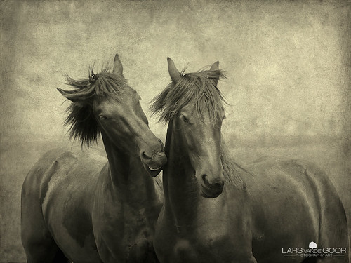 Horses don't whisper, they just talk | by larsvandegoor.com