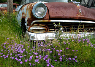 Rusty Car and Wild Flowers | by *Kid*Doc*One*