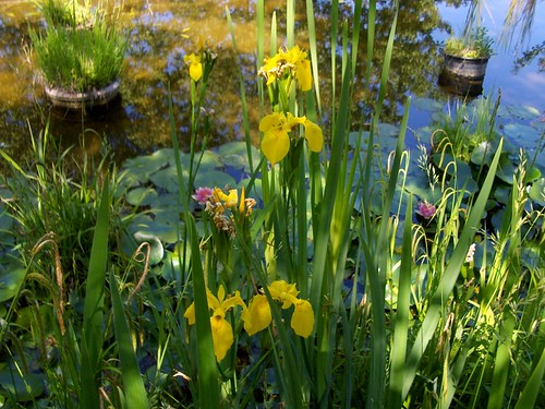 Giardino degli iris firenze giardino degli iris del for Giardino 3d gratis italiano