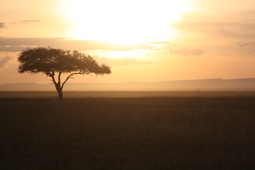 Serengeti Sunset | by Koen Muurling