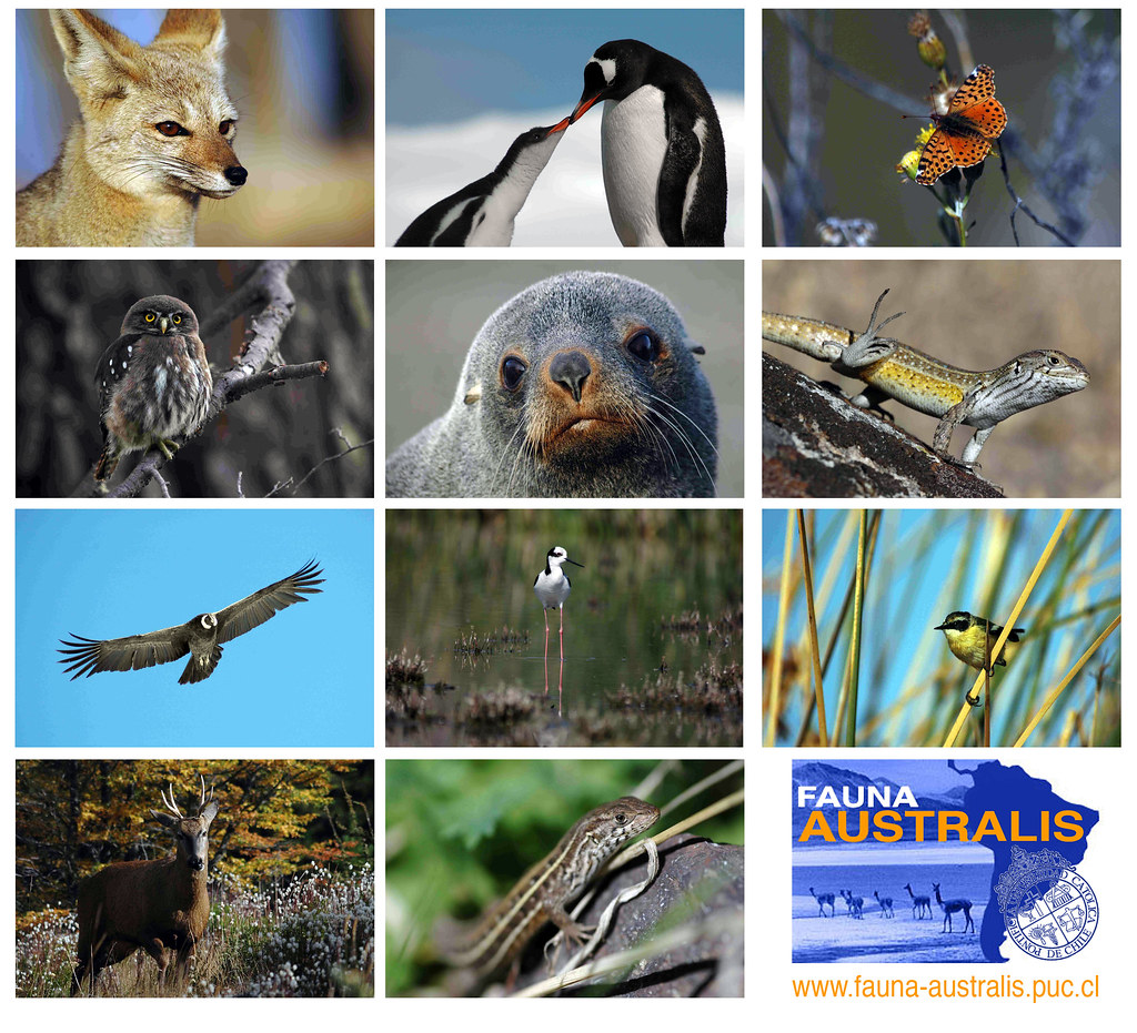 Fauna Australis | by FAUNA AUSTRALIS RESEARCH GROUP (CHILE)