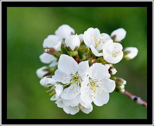 Becca Blossoms Nude Photos