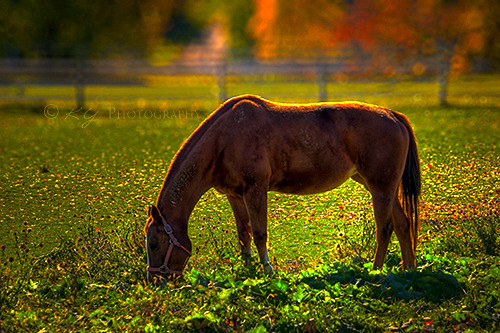 Grazing Horse | by KY Design and Photography