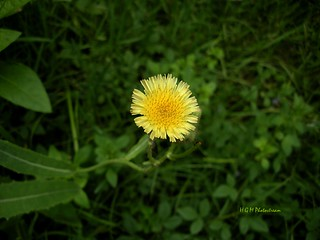 Beauty weeds | by H G M