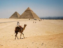 Camel at the Pyramids, Cairo | by David & Cheryl M