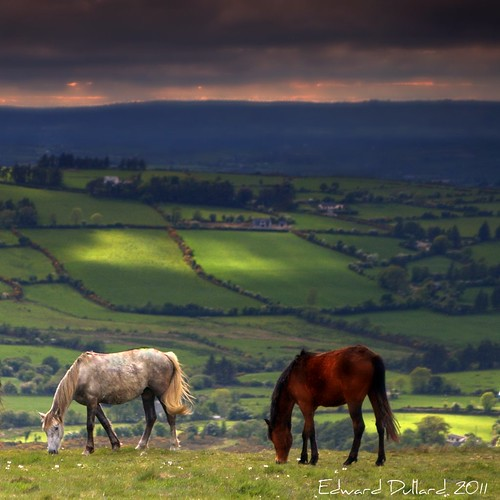 WILD IRISH HORSES. | by Edward Dullard Photography. Kilkenny, Ireland.