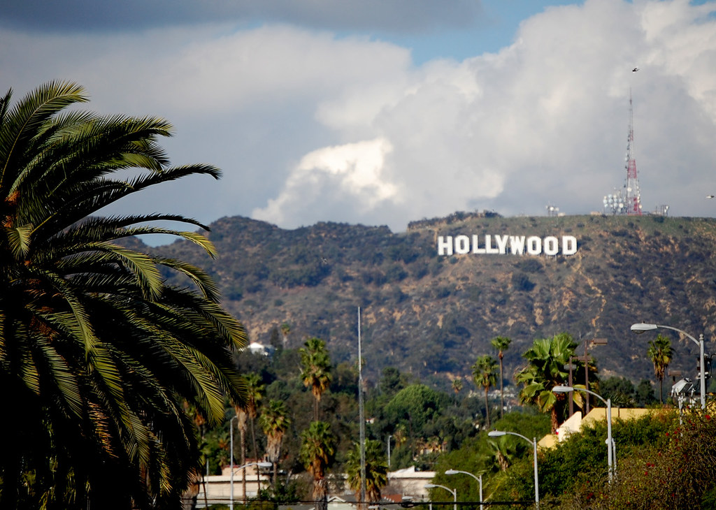 Palm Tree And The Hollywood Sign