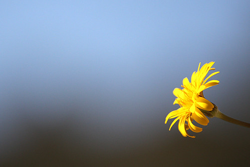 First born flower | by Marcel Neumann