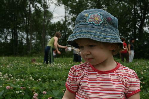 25 cents le casseau cueillir des fraises dans un cham flickr - Comment cueillir des fraises ...